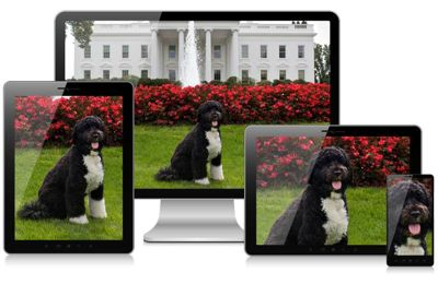 four devices showing art directed crops of a dog.
